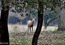 Sulle tracce del Cervo della Mesola – Itinerario guidato in pulmino elettrico – Sabato 26 settembre 2020